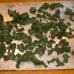 Medicated Kale Chips after baking.