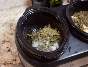 Coconut Oil ready for marijuana infusion in the slw cooker
