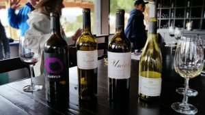 Wines from Valle de Guadalupe, Baja California, Mexico