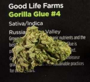 Strain Reviews - Gorilla Glue #4