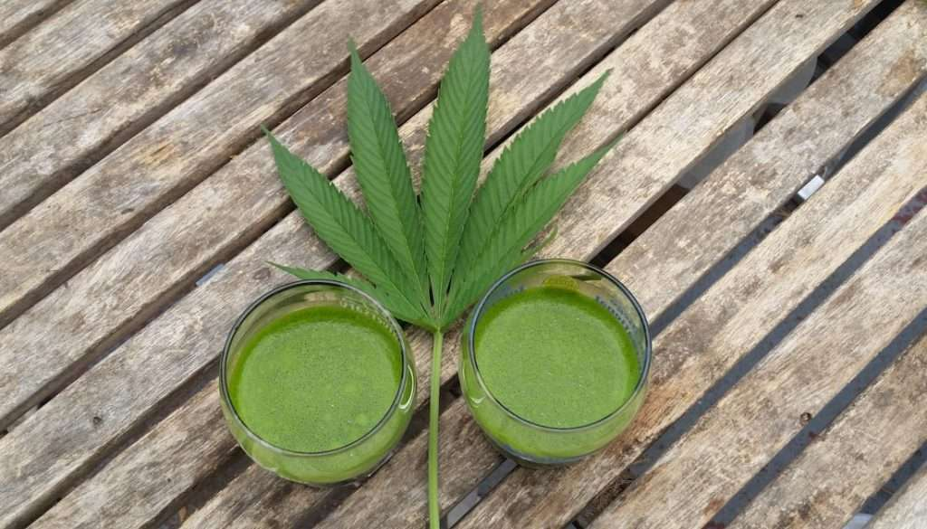 How to Use Marijuana Leaves - raw marijuana juice