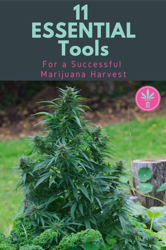 Headline graphic for 11 Essential Tools for a Successful Marijuana Harvest
