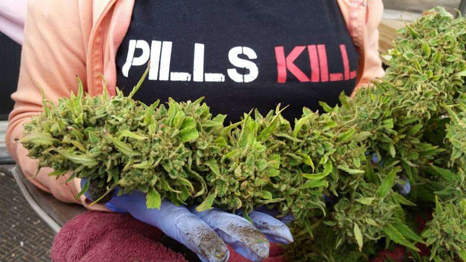 Pain Management, Why Cannabis is a Safer Alternative