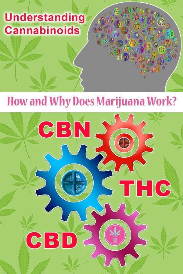 Understanding Cannabinoids: How and Why Does Marijuana Work