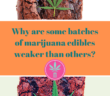 2 marijuana brownies with the captions: