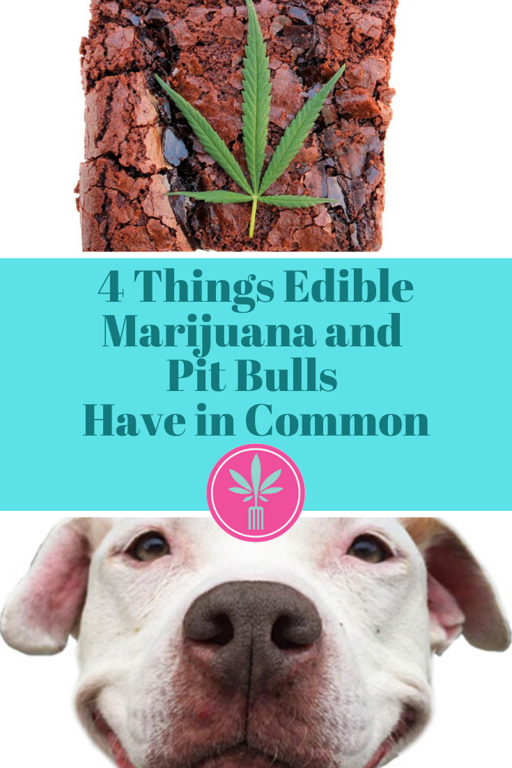 Marijuana Brownie and a Happy Pit Bull