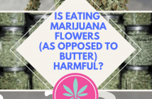 "caption ""Is eating marijuana flowers harmful?"""