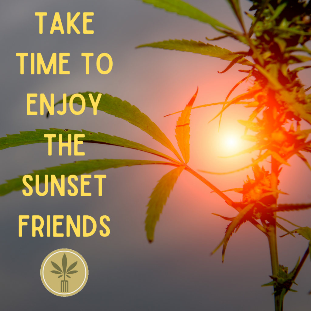 marijuana leaves silhouetted in the sunset